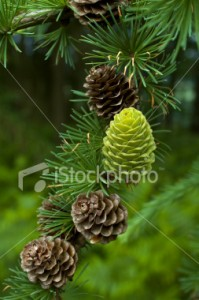 ist2_1796700-green-cone